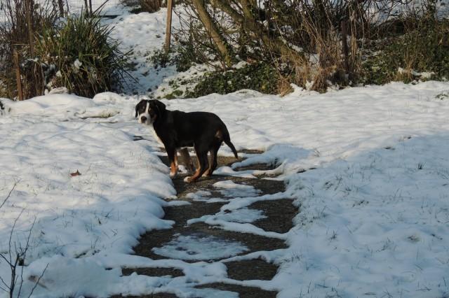 à 3 mois, il profite de la neige dans son nouveau jardin